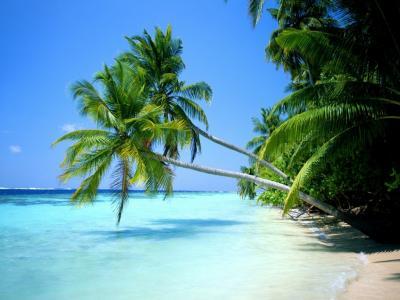 20100611013735-playa-paradisiaca.jpg